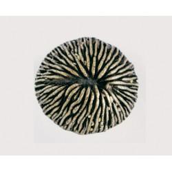 Emenee-OR425 Mushroom Coral