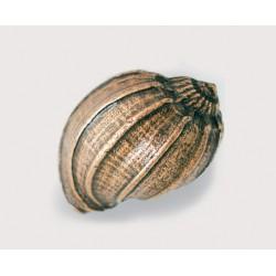 Emenee-OR428 Bonnet Conch