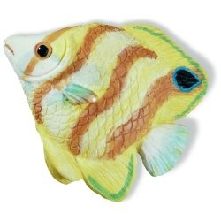 SIRO-H025-67 Caribe Yellow & Orange Stripe Fish KNOB