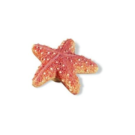 SIRO-H023-67 Caribe Starfish KNOB